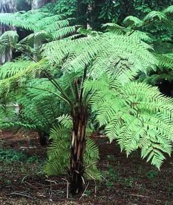 Plantes supportant de très fortes chaleurs